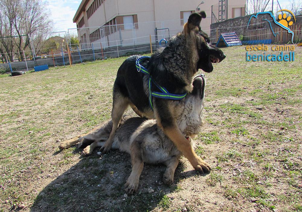 cachorros_educacion