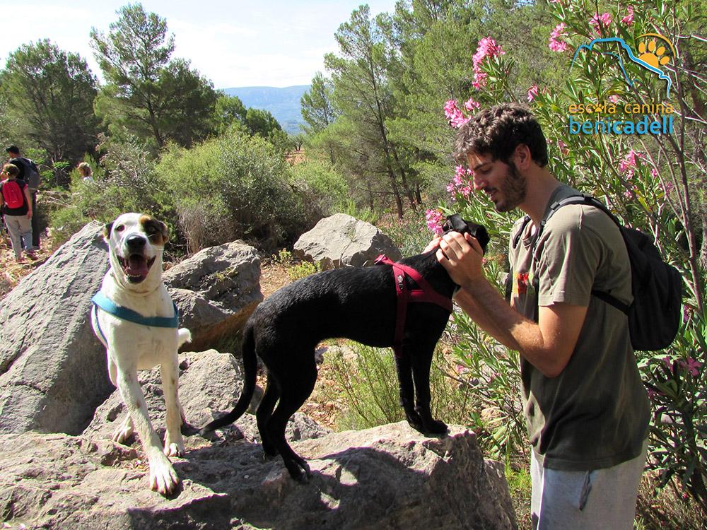 escapadas_caninas