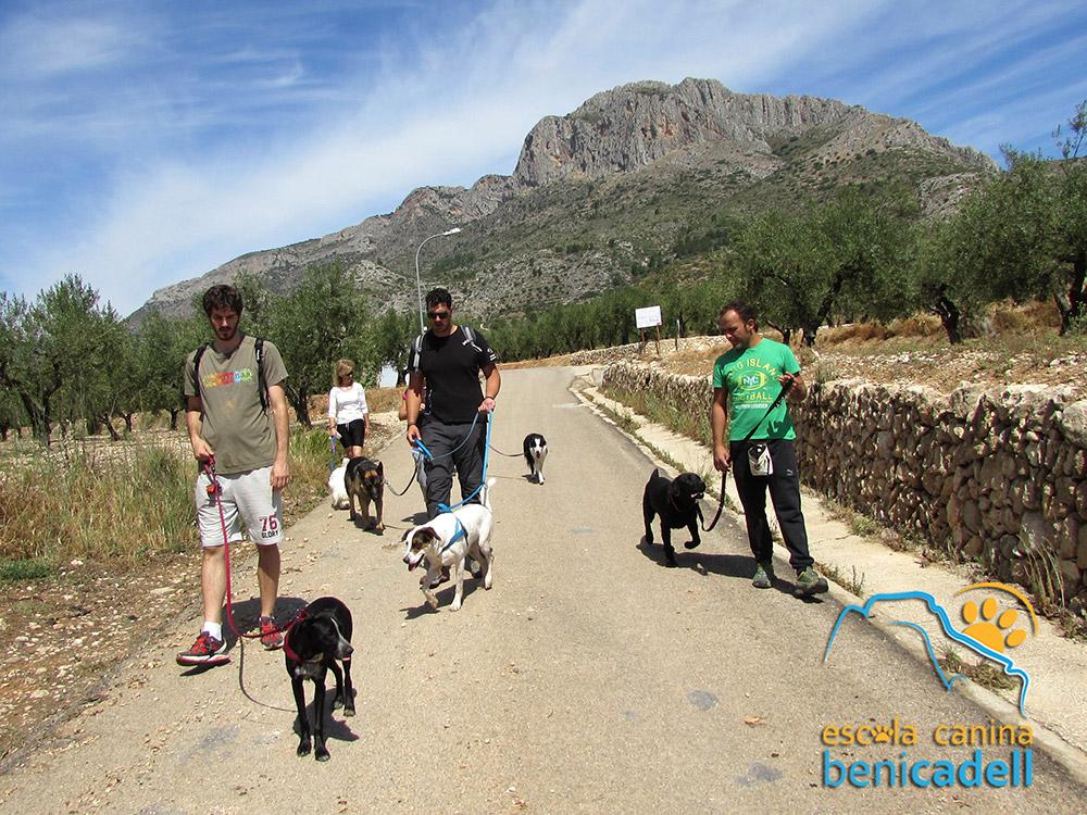 paseos_caninos