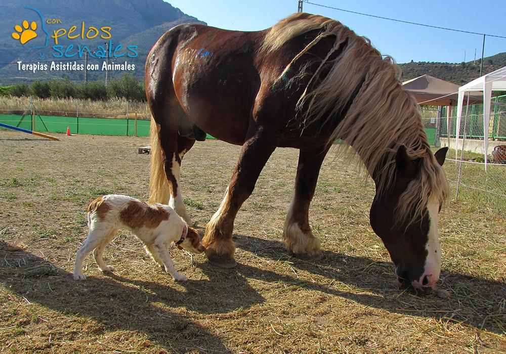 Indi_educador_canino