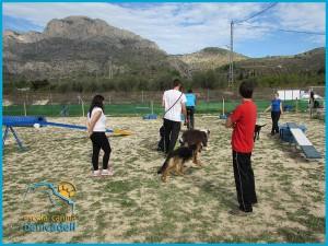 curso_para_cachorros