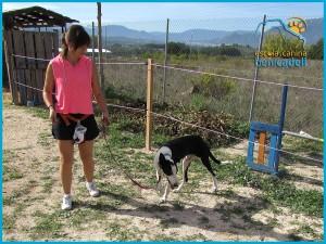 curso_educacion_canina_perros