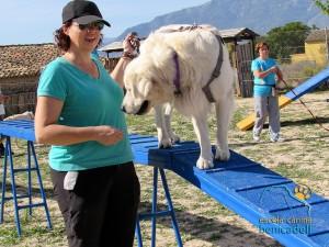 educacion_canina